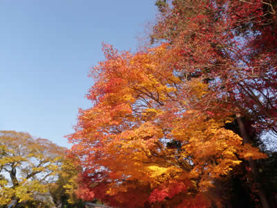 kyoto2013120201.jpg