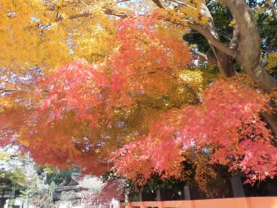 kyoto2013120202.jpg