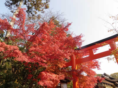 kyoto2013120204.jpg