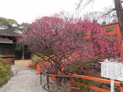 kyoto2014031001.jpg